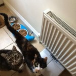 Pepsi & Max enjoying their breakfast